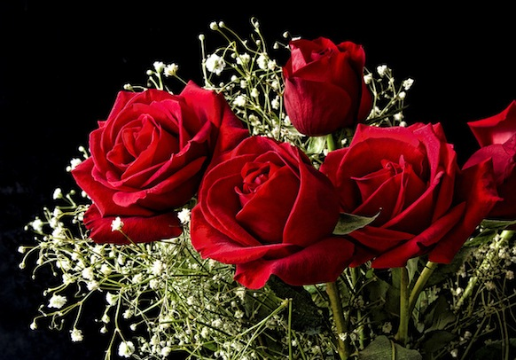 Red Roses For Valentines Day The Lord Bute